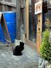 could you let me in...? (matsugoro) Tags: door animal digital pen cat 50mm olympus zuiko epl2