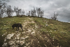 IMG_1482 (darko djokovic) Tags: sky nature serbia mountian westserbia