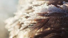 I Spot (Coquine!) Tags: greatbritain morning england macro ice grass closeup countryside frost unitedkingdom hampshire commute gras eis nahaufnahme swanwick sarisburygreen christianleyk