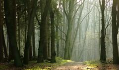 kept on walking (vertblu) Tags: winter mist misty fog forest woodland woods afternoon hamburg foggy february wald pathway naturepreserve naturschutzgebiet inthewoods hamburggermany woodpath duvenstedterbrook preservationarea preservearea nsgduvenstedterbrook vertblu