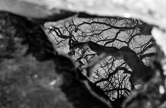 natures reflection (BWhite photo) Tags: trees blackandwhite bw reflection tree nature canon 50mm hertfordshire 6d 12l