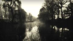 Foggy morning (Rolf Piepenbring) Tags: morning blackandwhite bw mist reflection monochrome misty fog nebel sw monochrom morgen spiegelung ochtend mistymorning einfarbig nebelstimmung mistigochtend