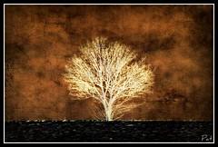 Luminated (patrick.verstappen) Tags: winter inspiration tree texture photo yahoo google nikon flickr belgium pat january imagine inverted textured facebook picassa luminated gingelom ipernity d7100 pinterest ipiccy