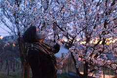 smell (janamartish) Tags: light portrait woman selfportrait flower girl night digital dark evening spring autoportrait blossom bokeh almond