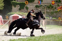 black horse (cedric5552) Tags: horse cheval fuji medieval fujifilm hippique joute hippisme xt1