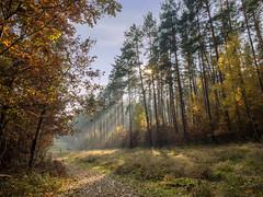 Sunbeams II (Thomas Heuck) Tags: trees light forest rays sunbeams mritznationalpark