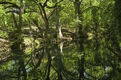Landing on Cypress Creek (malcolmharris64) Tags: trees creek reflections texas springs rivers cypress streams springtime wimberley