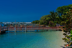 Florida Life: Boater's Paradise (Thncher Photography) Tags: beach nature landscape boats outdoors island dock florida turquoise sony scenic azure tropical yachts fullframe fx singerisland palmbeach waterscape rivierabeach oceanscape southeastflorida sonyfe2870mmf3556oss a7r2 ilce7rm2 sonya7r2