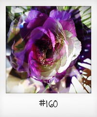 """#DailyPolaroid of 6-3-16 #160 • <a style=""""font-size:0.8em;"""" href=""""http://www.flickr.com/photos/47939785@N05/26032272414/"""" target=""""_blank"""">View on Flickr</a>"""