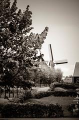 Molinos de Volendam (Marisol Torremocha Lpez) Tags: europa holanda molinos volendam