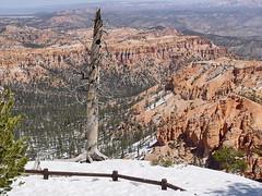 Bryce Canyon National Park in Utah (GMLSKIS) Tags: utah nationalpark bryce brycecanyon