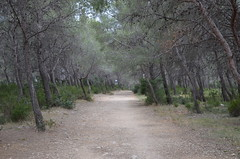 Inception path (dfromonteil) Tags: trees camino path arbres leaning chemin penchs