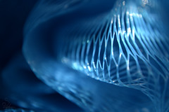 Ocean (Sarah_Brigham) Tags: blue light shadow abstract detail macro texture closeup digital nikon web curves fabric form dslr loofa loofah abstractphotography nikond5200 sarahbrigham