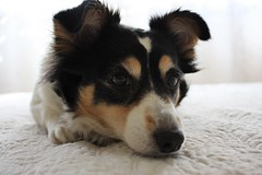 (Valentina Poffio) Tags: light dog home photo eyes maya mydog canoneos40d