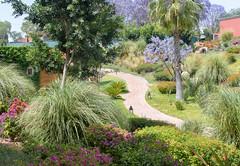 Garden Path (Maria Sciandra) Tags: green mexico flora sanmigueldeallende colonialmexico rosewoodsanmigueldeallende unusualcolorcombinations mariasciandraphotography nikond7200