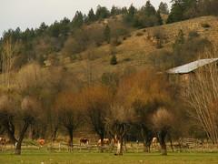 Trees with buds (Senol Demir) Tags: kastamonu turkey spring bahar tree aa tomurcuk