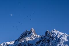 Mountain Jackdaws over Piz Muragl (Daniel.Peter) Tags: schnee snow mountains schweiz switzerland berge engadin jackdaw bergdohle muottasmuragl pizmuragl dpe3x