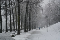 L'inverno alle spalle - The winter behind. (sinetempore) Tags: street trees woman white snow girl alberi torino donna run neve turin bianco ragazza correre parcodelvalentino linvernoallespalle thewinterbehind