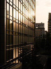 Gold City (H.H. Mahal Alysheba) Tags: city light sunset urban building monochrome yellow japan architecture lumix tokyo cityscape snapshot elmarit macroelmarit 45mmf28 gx7 leicadg
