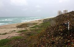 20160324_05 John D. MacArthur Beach State Park Singer Island Riviera Beach FL USA (Frabjous Daze) Tags: ocean statepark park sea usa beach florida atlanticocean meri naturepark ranta sandbeach yhdysvallat hiekkaranta valtameri johndmacarthurbeachstatepark atlantinvaltameri