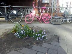 Still Life (Quetzalcoatl002) Tags: street pink flowers stilllife graffiti mess bikes messy laughable pitifull