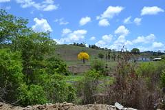 001-003 paisagem com ip amarelo (agnaldo.severo) Tags: verde branco azul casa paisagem cu amarelo nuvem fazenda rvores ip