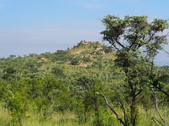 Pretorius Kop (little_duckie) Tags: africa southafrica buffalo zebra cheetah giraffe impala hyena rhinoceros krugernationalpark kruger gamedrive kudu bushbuck