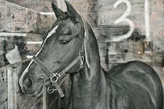 Horse in Stable (jauza1) Tags: blackandwhite bw horse cheval stable