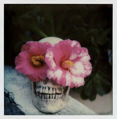 Skull Flowers (tobysx70) Tags: california ca door pink flowers toby test white 3 plant color green film wall project polaroid sx70 photography skull for la petals succulent los spring angeles bokeh teeth canyon hills cameras 600 hollywood type april week member rollers camellia hancock day5 pioneer slr680 generation patina impossible 1215 beachwood aeonium roid the 2016 polaroidweek gen3 roidweek frankenroid impossaroid