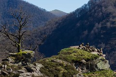 ItsusikoHarria-47 (enekobidegain) Tags: mountains montagne vultures monte euskalherria basquecountry bui pyrnes pirineos mendia buitres paysbasque nafarroa pirineoak bidarrai saiak vautours itsasu itsusikoharria