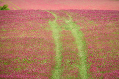 Drive Through the Clover (from our view) Tags: road green crimson field daylight nikon tennessee hill tracks trail april nikkor clover 2016 crimsonclover d810