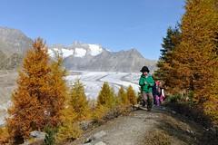 Familien-Wandern-Aletschwald-Aletsch-Arena-cp (aletscharena) Tags: schweiz wallis familien aletschgletscher unescowelterbe aletschwald naturpur familienurlaub aletscharena familienwillkommen
