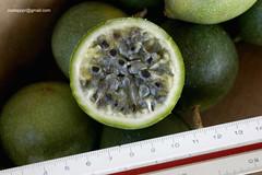 maracujaSilvestreDSC7138 (costapppr) Tags: passiflora passiflorasetaceamaracuj