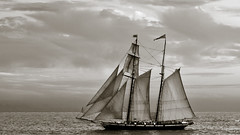 Pacific Sails (Thomas Dwyer) Tags: ocean wood sea blackandwhite sailboat boat nikon sailing ship pacific horizon sail tall tomdwyer d80