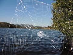 teia (Mrcio100) Tags: natureza teia de aranha lago gua paisagem planta web naturaleza natura nature natur mrcio100 marcio100 brasil brazil nikon
