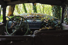 Opel Olympia (kleiner hobbit) Tags: nature decay natur innen olympia oldtimer inside grn opel armatur opelolympia
