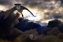 Fly to the moon on (goose)amer wings (Vivid_dreams) Tags: fiction moon detail art nature clouds artistic digitalart goose fantasy canadagoose digitalphotography digitalmanipulation artisticmanipulation