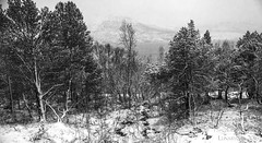 winter by the fjord and the trees are shivering (lunaryuna) Tags: trees winter bw mountains nature monochrome norway season landscape blackwhite fjord snowfall lunaryuna hibernation northernnorway tromsfylke arcticregion thespiritoftrees seasonalwonders winterabovethearcticcircle kjosenfjord