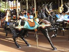 Antique Carousel Horse-Dorney Park (Corey J. Beitler) Tags: carousel amusementpark allentown lehighvalley dorneypark carouselhorse antiquecarousel cedarfair