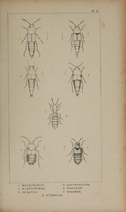 n138_w1150 (BioDivLibrary) Tags: greatbritain insect bugs beetles californiaacademyofsciences coleoptera taxonomy:order=coleoptera colorourcollections bhl:page=39306934 dc:identifier=httpbiodiversitylibraryorgpage39306934