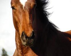 su mirada (danielavasquez616) Tags: chile horses horse luz animals caballo caballos photo eyes foto photos spirit sombra fotos animales fotografia mirada poder valiente fuerza equino uploaded:by=instagram