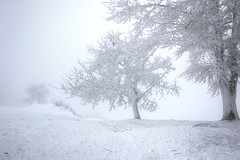 frozen solid. (jrseikaly) Tags: lebanon snow tree ice nature jack frozen high dynamic range arz hdr cedars solid phtography seikaly jrseikaly