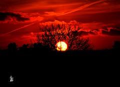 DSC_1683 - Sunset (Le To) Tags: sunset nature rouge soleil nikon ciel nuages crpuscule extrieur arbre calme couchdesoleil nikond5000