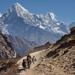 Yak caravan on Everest basecamp trek