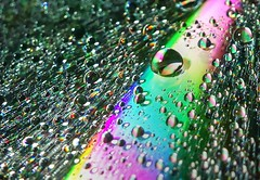 366 - Image 034 - Yet more droplets... (Gary Neville) Tags: sony photoaday 365 mk3 2016 366 garyneville rx100 365images 366images sonycybershotrx100 sonycybershotrx100iii