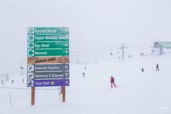 Whistler January 2016 (jennchanphotography) Tags: travel winter mountain snow canada tourism birds vancouver whistler snowboarding hotel groom skiing bc tourist resort explore blackcomb peak2peak jennchanphotography