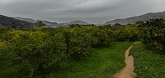 Huerta (Neo2kteleco) Tags: trees way landscape path country murcia blanca campo huerta