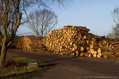 """""""boomweg"""" Noordhollands Duinreservaat (kramerich10) Tags: noordhollandsduinreservaat bomenenstruiken"""