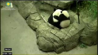 Attribution: Smithsonian's National Zoo