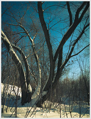 Curves (ezhikoff) Tags: winter snow tree